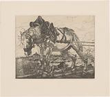 Draft horse at the Seine in Paris