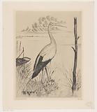 Stork on a bank