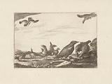 Crow and group of pheasants