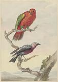 Two birds, including a red-green parrot