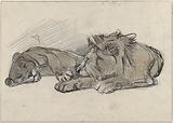 Lying lion and lioness