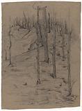 Bare pine logs on sloping terrain