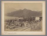 Train station and track along young banana plantations