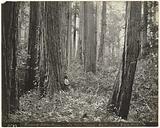Big Basin Redwoods Forest