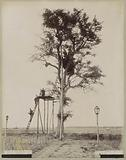 Soldiers in observation post in tree at Roempit