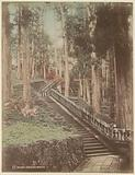 Wooden stairs in a forest, probably at a temple in Nikko