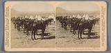 Camp with horses believed to be the British Army at Colesberg in South Africa