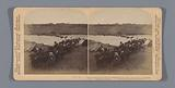 Herd of cattle that the British captured from the Farmers near the Modder River, South Africa