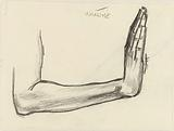 Study of a forearm
