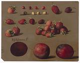 Strawberries and plums