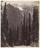 Mountain landscape with fir trees in Wanga Valley in India