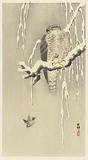 Hawk with captive tree sparrow.