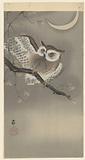 Long-eared owl in ginkgo