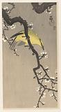 Chinese golden oriole on plum blossom branch
