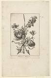Five flowers, including anemones and crowfoot