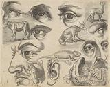 Study sheet with drawing examples: eyes, heads and animals.