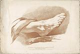 Right foot study