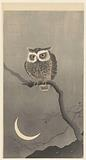 Long-eared owl on bare tree branch