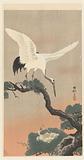 Japanese common crane on branch of pine