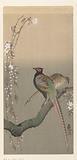 Pair pheasants and cherry blossom
