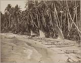 Beach with palm trees and boats, Galle