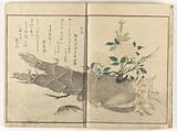 Mole cricket and earwig on bamboo shoot