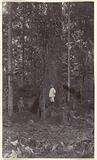 Plantation owner Theodoor Brouwers with friend in forest, plantation Accaribo in Suriname