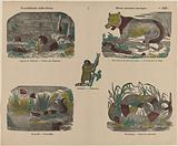 Various wild animals / Divers animaux sauvages