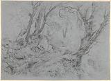 Study of trees before a mountain slope