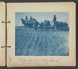 Farmers haying with a horse-drawn combine harvester