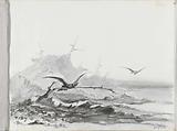 Seagulls at a rock coast