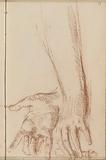 Forearm and hands