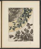 Areas with lemons, laurel branches and edelweiss