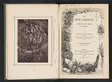 The fern paradise a plea for the culture of ferns