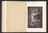 Hunting dog, called Tamerlan