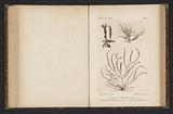 Three types of seaweed