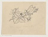 Butterfly on a blackberry branch