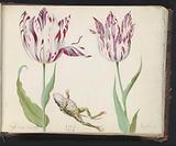 Two tulips with dead kiker and caterpillar