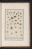 38 Winged Insects