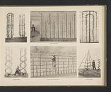 Four images and two reproductions of designs of trees growing in different shapes against fencing, from the École …