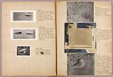 Counter-shading, study folder for book Concealing Colouration in the Animal Kingdom