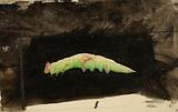 Larger Spotted Beach Leaf Edge Caterpillar, study for book Concealing Colouration in the Animal Kingdom