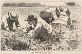 The Strawberry Bed, from Our Young Folks, July 1868
