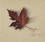 Untitled (Autumn Leaf)