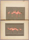 Flamingoes, study folder for book Concealing Colouration in the Animal Kingdom