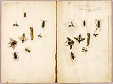 Insects – Coloured, study folder for book Concealing Colouration in the Animal Kingdom