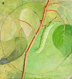 Sphinx Caterpillar, study for book Concealing Colouration in the Animal Kingdom