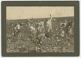 No. 86, Picking Cotton.