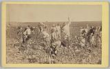 No. 19, Cotton Picking.