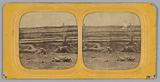 Stereograph of deceased Confederate soldiers near a fence at Antietam, Maryland